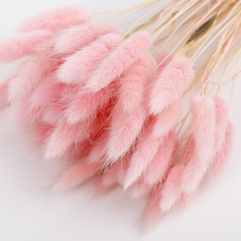 1 Bunch Rabbit Tail Grass Plant Flowers Rabbit Tail Grass Home Wedding Party DIY