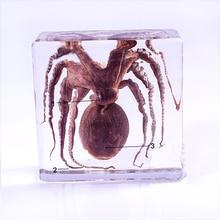 Реальные образцы осьминога в прозрачном блоке, учебный инструмент для обучения биологии средней школы