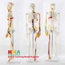 Médico 85cm músculo esquelético humano iniciar e ponto de parada modelo neural pequena agulha bisturi esqueleto humano modelo mgg206