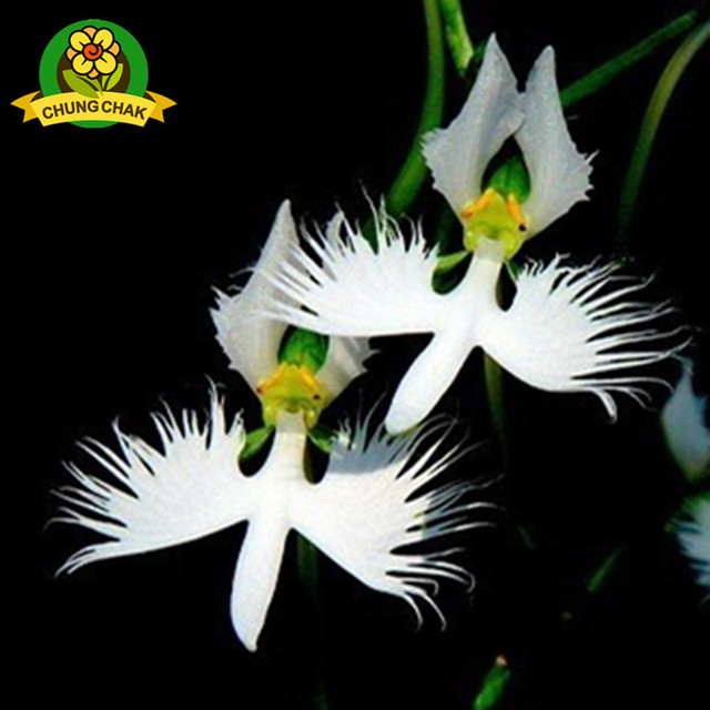 Rare flowers best flower 2017 15 beautiful rare flowers that look like something else pletely mightylinksfo Image collections