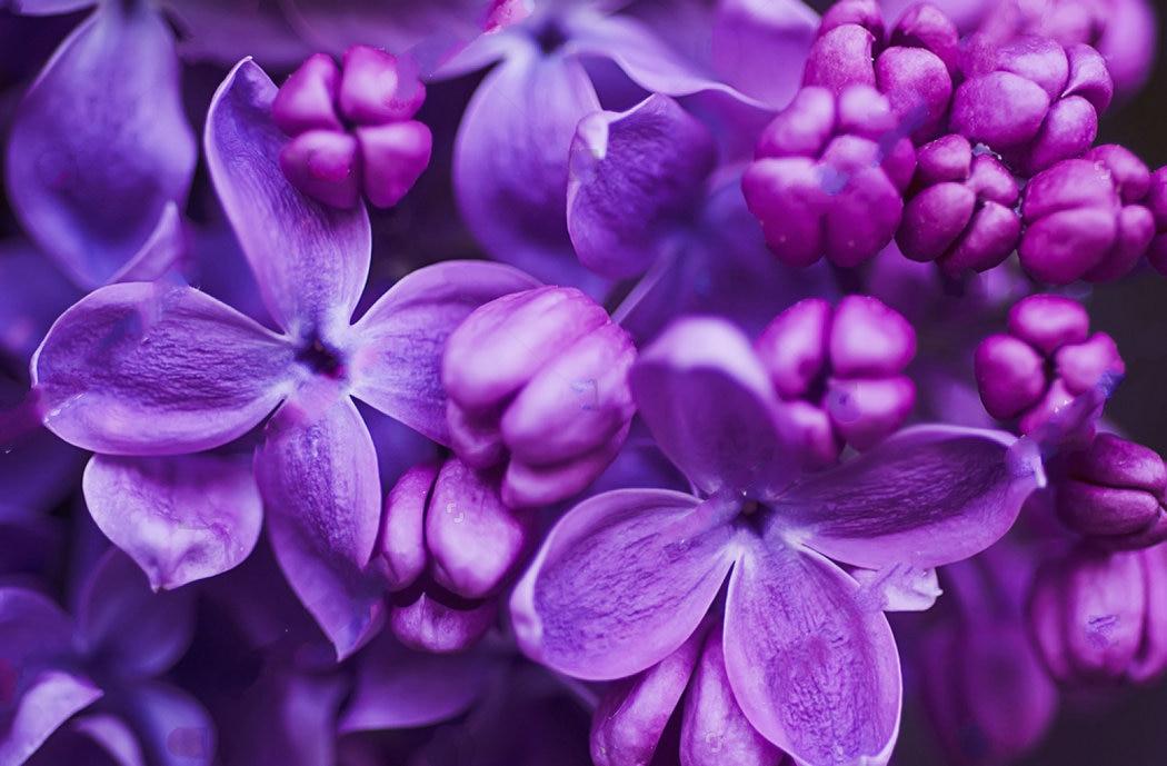 картинки фиолетового цвета фото снять егильет самостоятельно