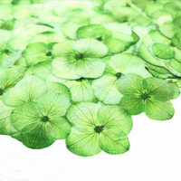 Art Paper Ornament Real Pressed Flowers Color Absorption Green Hydrangea For Birthday Card Material 100 Pcs Free Shipment