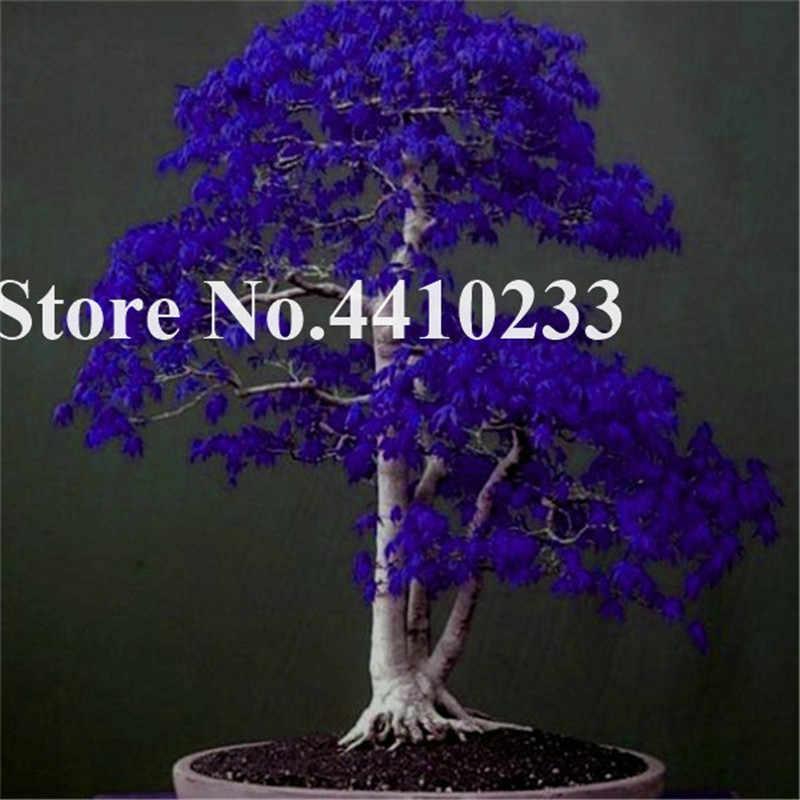 20 ピース/ロット日本紫色のカエデ盆栽、虹色美しい屋内木 Seedssplant Diy 家庭菜園用のギフト送料無料