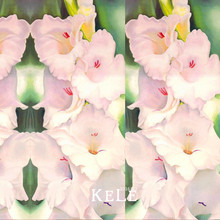 Big Sale!Flwer Seeds Pink Gladiolus Flower Bulbs Seeds Sword Orchid Bonsai Plants For Home & Garden 100 Seed/pack,#57R1TY