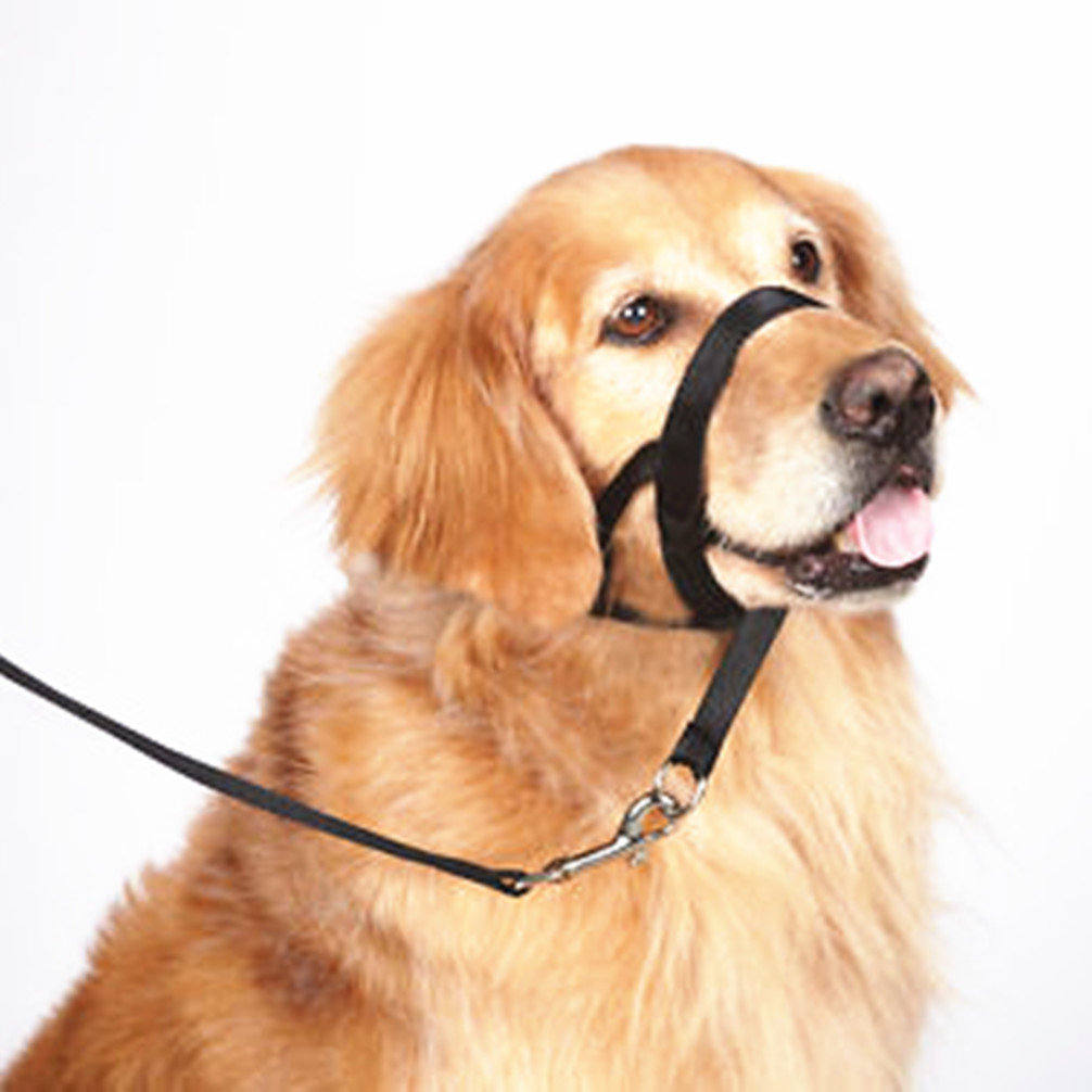 Where Can You Buy A Dog Muzzle