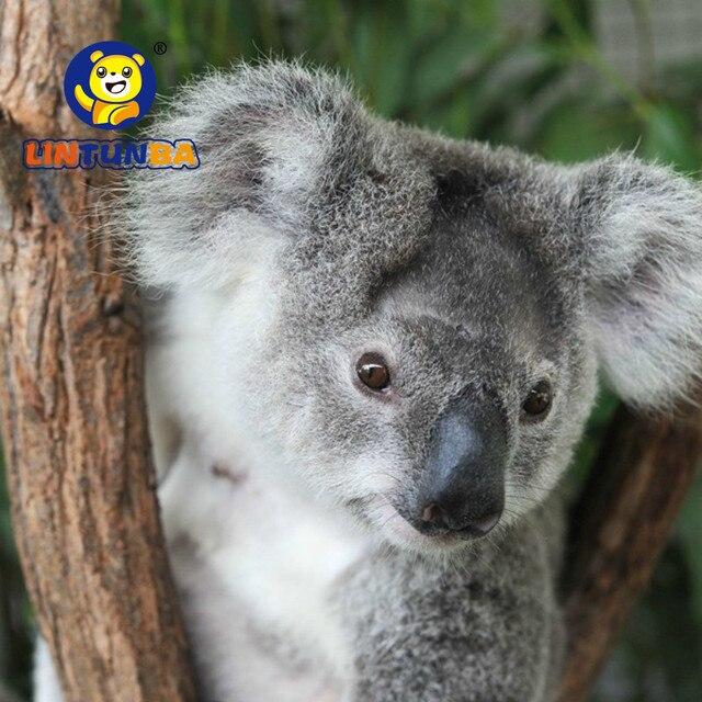 16 CENTIMETRI Nuovo Arrivo Super Cute Piccolo Koala Orso di Peluche Giocattoli Avventura Koala Bambola Di Compleanno Regalo Di Natale PT024 4