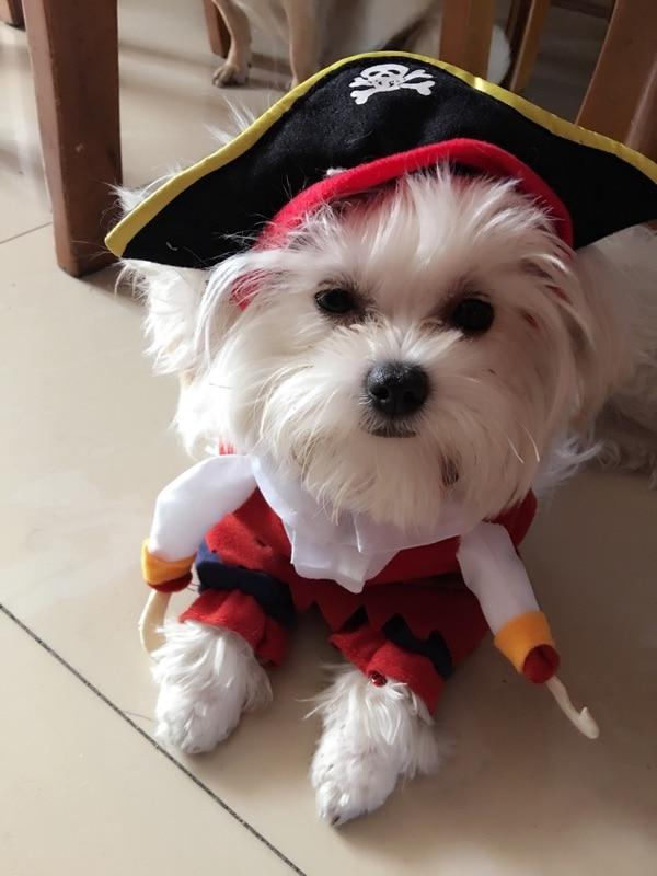 aliexpresscom buy dogcat halloween costume pirate style cartoon pet dog cat clothes puppy cat costume pet clothes dog costume dog coat cat jacket from