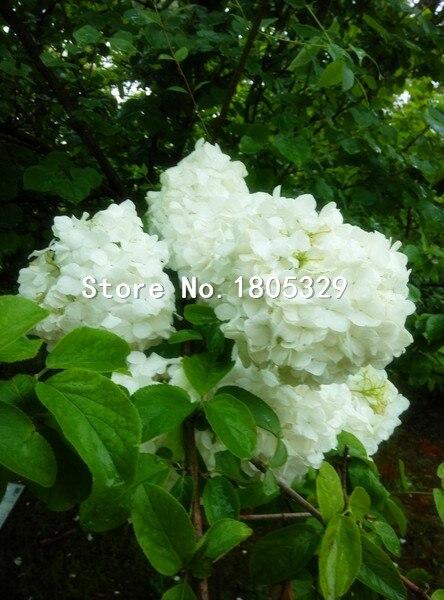 Order Flowers Australia