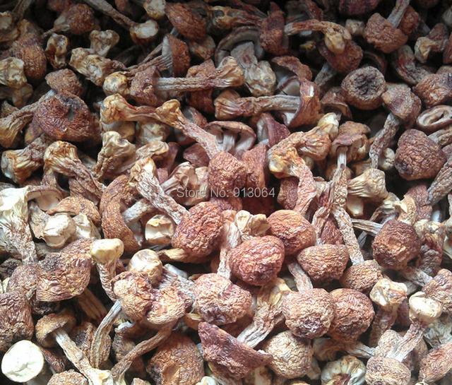 0.5 kg peso Líquido novos bens por atacado Yunnan cogumelo Agaricus blazei Murrill/Himematsutake/Kawaariharatake para o alimento de saúde