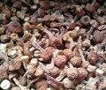 0.5kg Net weight new goods wholesale Yunnan mushroom Agaricus blazei Murrill / Himematsutake/Kawaariharatake for health food