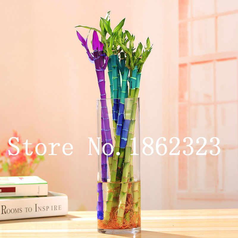 على بيع 100 قطعة جديد الطازجة داخلي الخيزران بونساي محظوظ موسو شجرة مصنع ، غريبة بوعاء النباتية لل ديكور حديقة المنزل سهلة تنمو