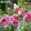 100 PCS Sementes Perenes Plantas com flores Lisianthus Eustoma Vermelho Multicolor para DIY Home & Garden