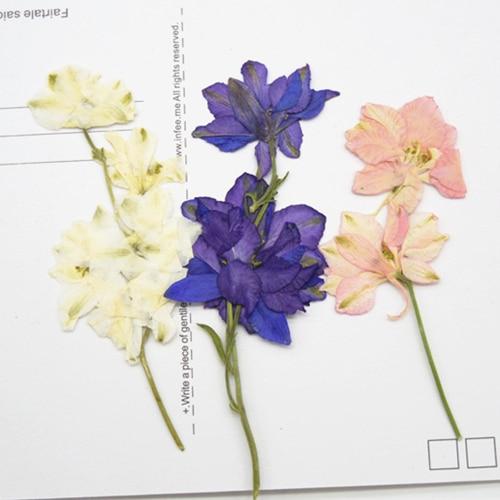 80 pcs livraison gratuite press fleur fleurs s ch es fleurs naturelles bricolage mat riaux. Black Bedroom Furniture Sets. Home Design Ideas