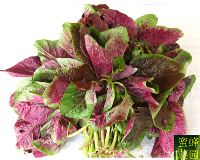 Lys rød amaranth Bonsai Grøn amaranth Røde grøntsager Sky Coriander Bonsai 500 Bonsai