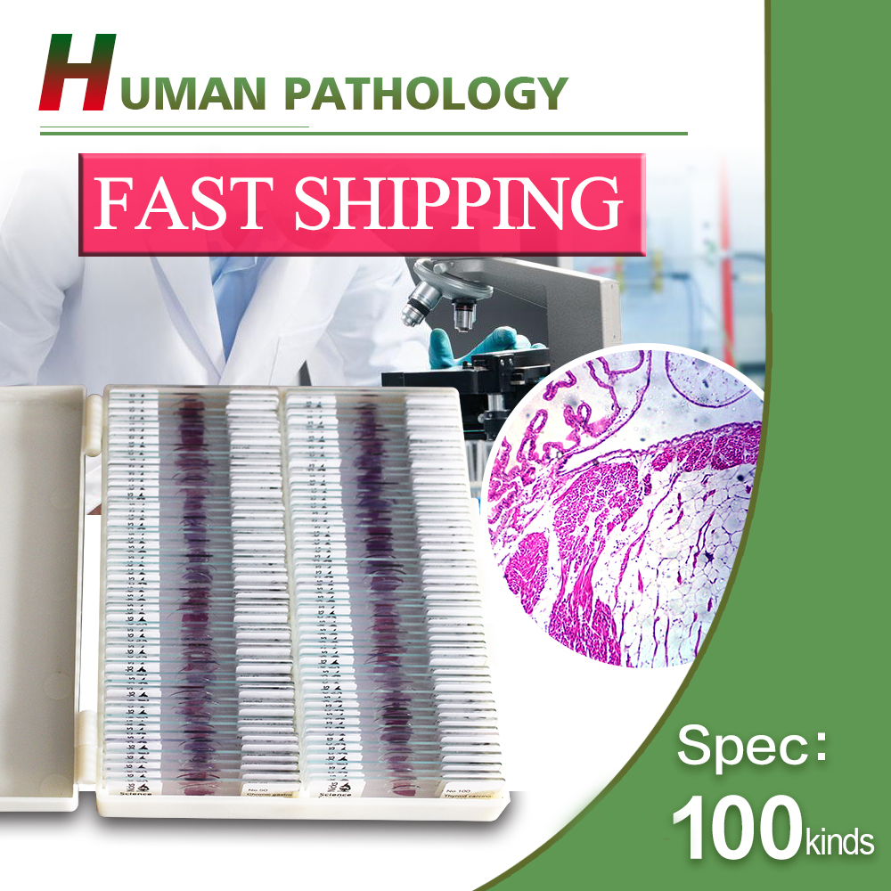 Doctor and medical student 100pcs Human pathology microscope slides set high quantity medicine detection type blood and marrow test slides