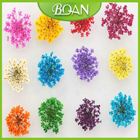 1box BQAN Hot Sale Colorful Dried Flowers Nail Art Decoration DIY Tips With Case Small Flowers