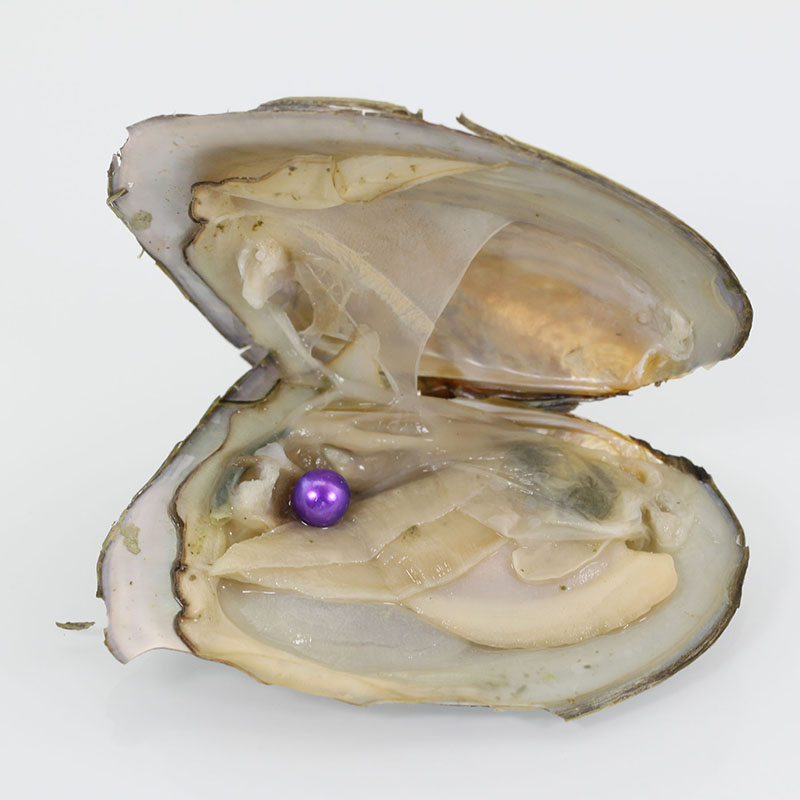 2018 wholesale natural natural lavender Round pearls freshwater natural Cultured in Fresh Oyster Pearl Mussel Farm Supply FR008