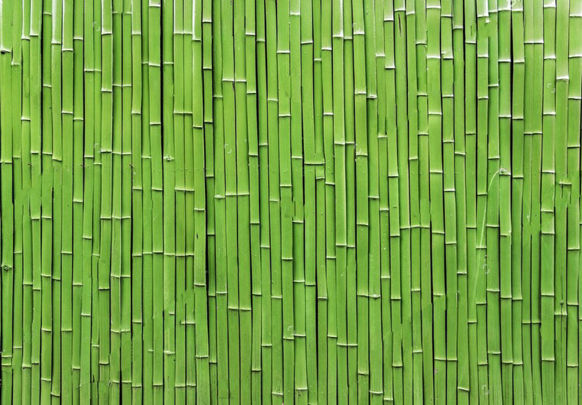 green Bamboo Raft photo backdrop High quality Computer print wall background