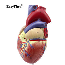 лучшая цена EasyThru 1:1 Human Heart Anatomical Model Heart Physician Medical Teaching Tools
