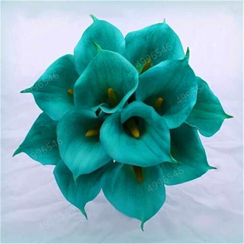 200 Pcs Calla Lily Zantedeschia Aethiopica Outdoor & Indoor Plantas de Interior Bonsai Flores Quarto Início Jardim Planta de Vaso Decoração Do Casamento
