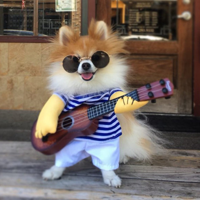 Dogbaby Halloween Costumes Vêtements Pour Animaux