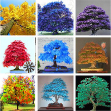50 pcs japanese rare maple tree perennial bonsai plant DIY home garden flowers Natural Growth Grove Shrub outdoor plante