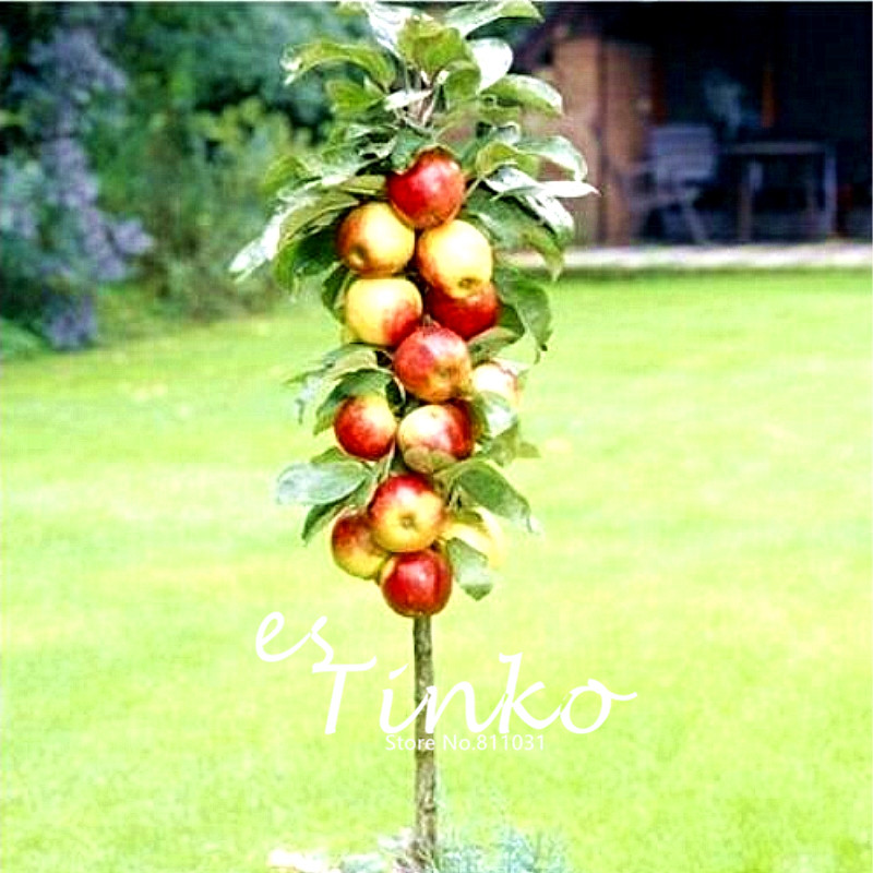 50pcs Lot Cherry Seeds Mini Bonsai Fruit Tree Seed For Diy Home Garden