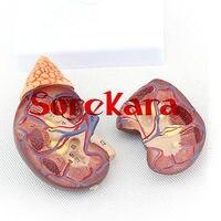 1 1 Human Anatomical Kidney Adrenal Gland Organ Medical Teaching Model School Hospital