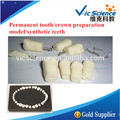 Diente permanente/preparación de la corona/dientes sintéticos