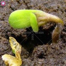 100pcs Bonsai Plant Grass Seeds Green Herbs Dancing Funny Grass Seeds for Home Garden Supplies Free Shipping Best Packaging HOT