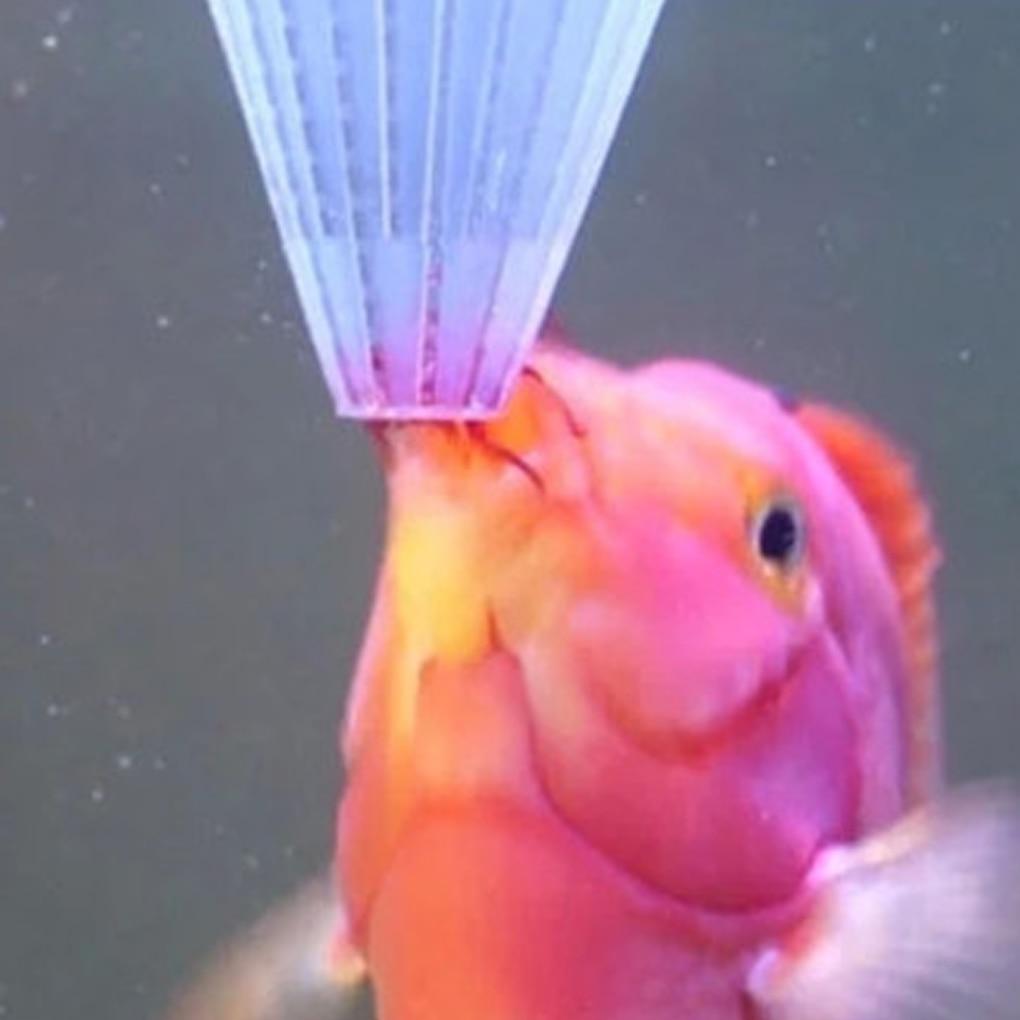 Tapered Aquarium Fish Feeder Red Worm Funnel Fish Food Feeding Cup