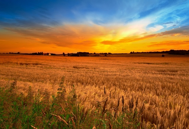 field of autumn