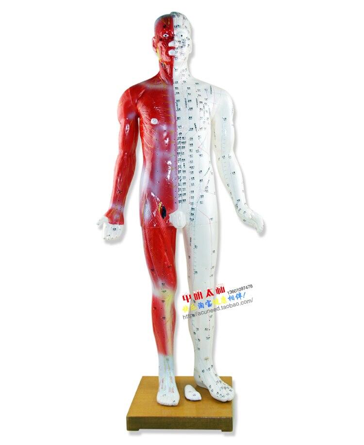 Pontos de Acupuntura & Muscle Modelo 85 cm Masculino Humano Ponto de ...