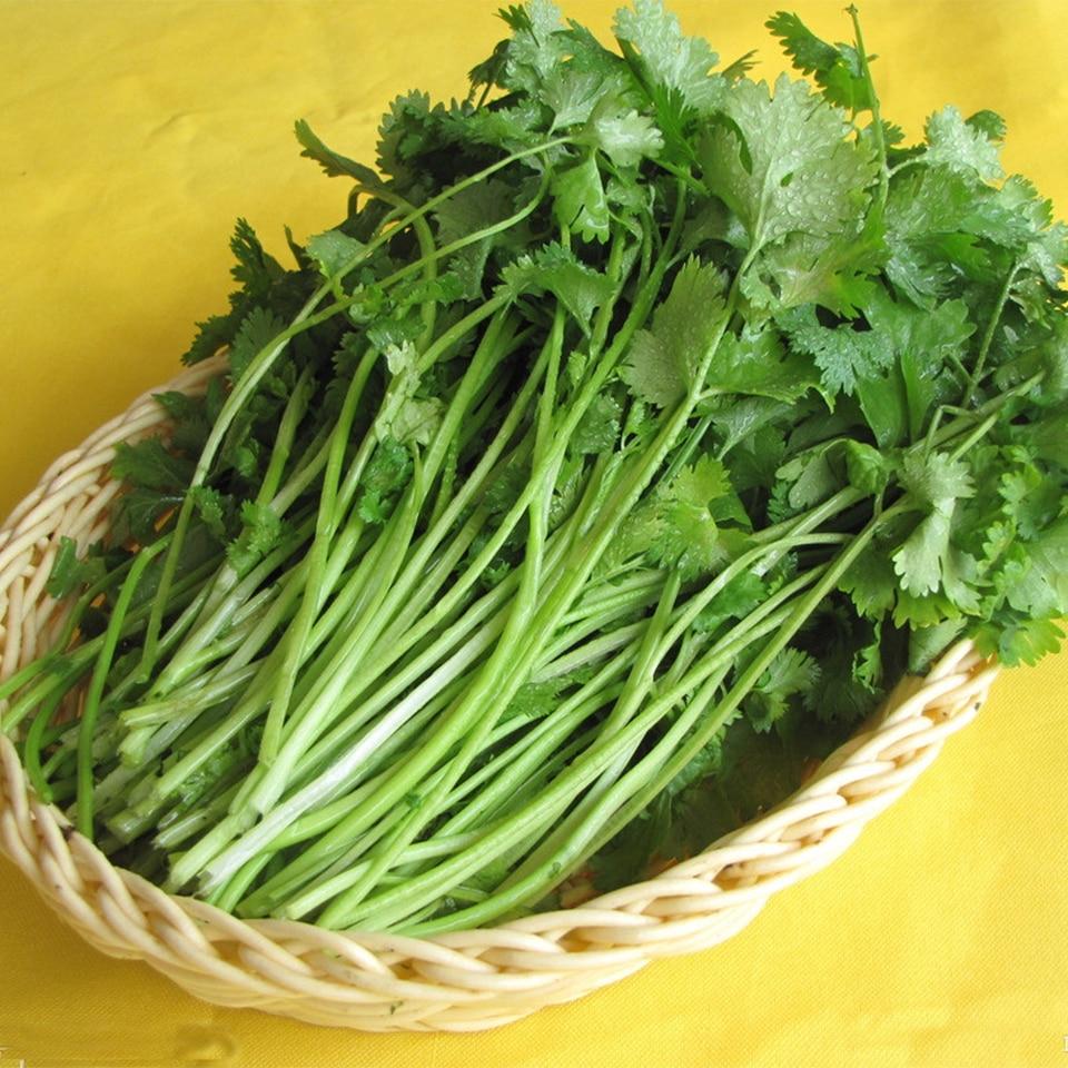Оригинальной упаковке кориандр сезона петрушка органических Кориандр, балкон овощи-200 шт. для дома и сада