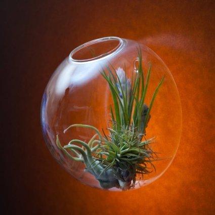Bubble Glass Wall Vasehanging Wall Bubble Terrariumwall Fish Tank