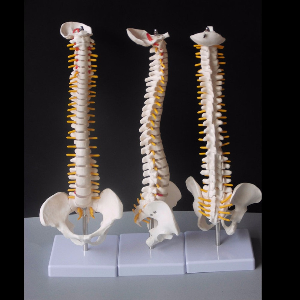 45 см модель позвоночника человека с тазовым тазом анатомическая Анатомия позвоночника медицинская модель спинальной колонки модель+ стенд Fexible