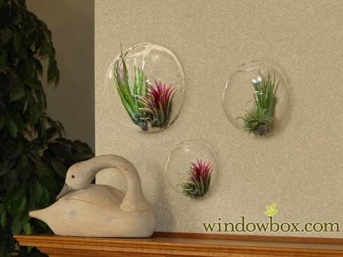 6pcs-set-wall-hanging-glass-fishbowl-wall-planter-vase-for-home-decor-garden-decor-house-ornament (2)