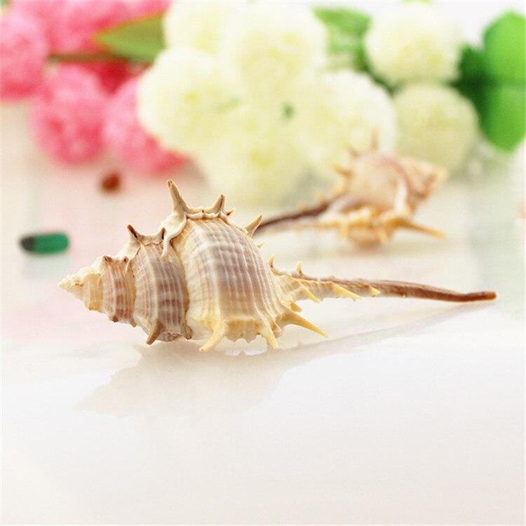 8-9cm Witch Conch Natural Seashell Aquarium Ornament Fish Tank Landscape Sea Snail Home Decoration Wall Stickers
