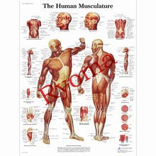 Vintage about The Human Musculature Posters Kraft Paper Painting Wall Sticker Print Art Hospital Classrooms Interior Decoration