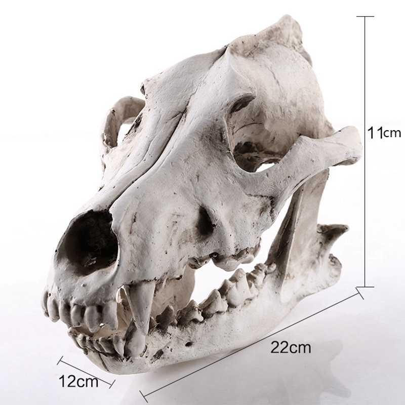 Red Fox Skull Teaching Quality Replica