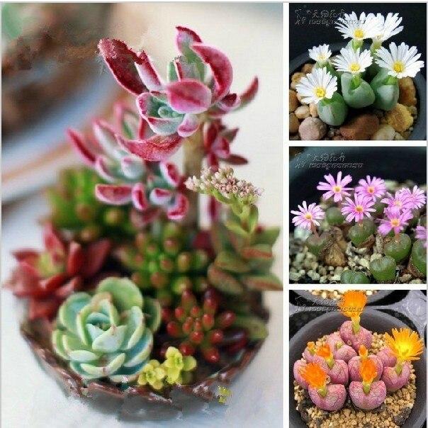 100 pcs Mix sementes de plantas Suculentas Lithops Pedra Fungos sementes carnudas Bonsai planta Sementes para casa & jardim