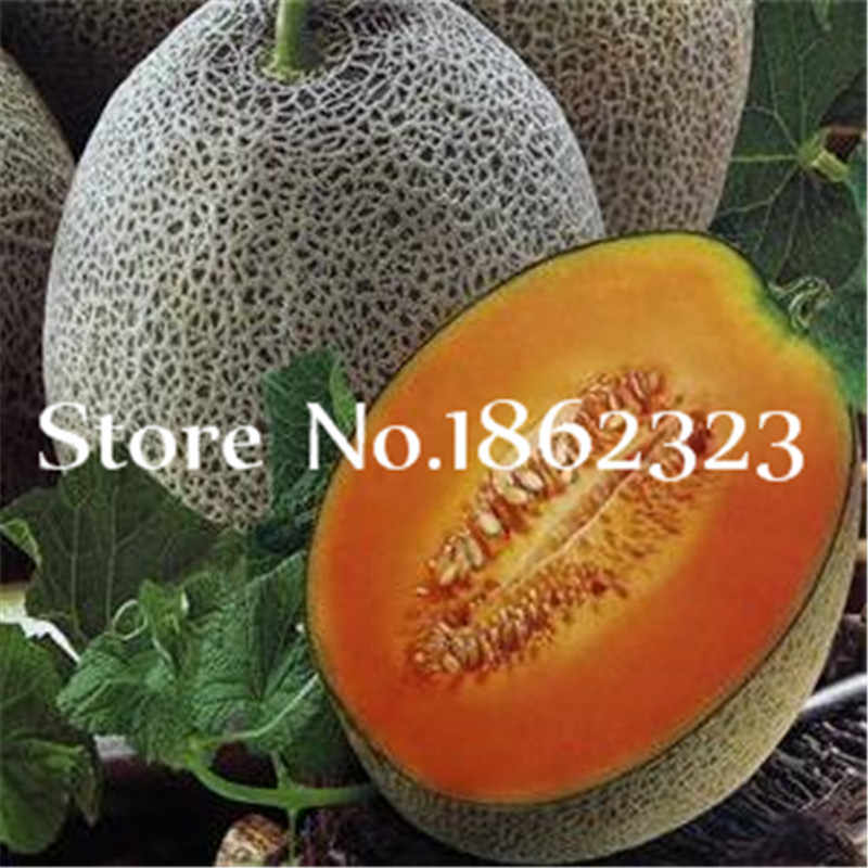 30 Pcs Japanese Muskmelon Fruit Cantaloupe Bonsai, Green Flesh Vegetable Fruit Delicious Honeymelon Balcony Home Garden Plants