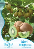 Original Pack 30 Seeds Pack Kiwi Fruit Seeds Actinidia Chinensis Bonsai Kiwi Tree Seeds