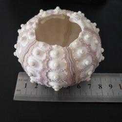HappyKiss-Lote de 6 unidades de concha Natural, concha de mar Natural para decoración de boda, playa, Costa y hogar, color morado, verde claro y rosa