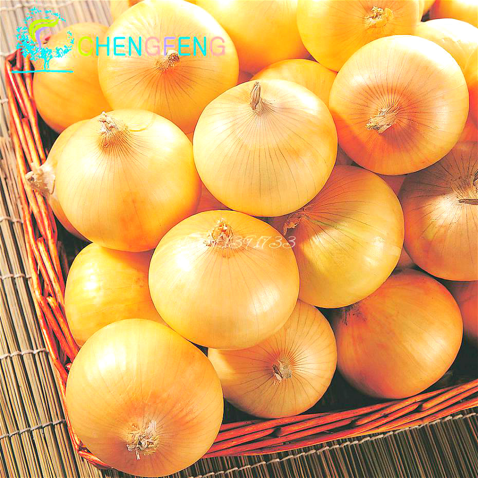 New Delicious 100pcs Giant Onion Seeds Russian Heirloom Vegetables Garden Supplies For Fun Interest DIY