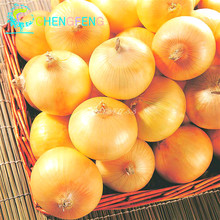 New Delicious 100pcs Giant Onion plants Russian Heirloom Vegetables Garden Supplies For Fun Interest DIY