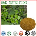 500g Top Quality Gymnema Sylvestre Extract  with 30% Gymnemic acid