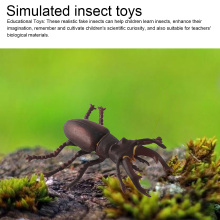 Insect model figures figurines toys plastic Simulation spider Cockroach  cat Monkey Horse zoo Animal Doll Gift