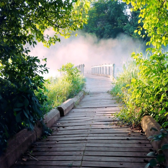 Laeacco Spring Hazy Forest Wooden Bridge Pathway