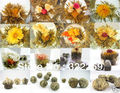 [GREENFIELD] 10pcs Different kinds Chinese Blooming Flower Tea 100% Handmade Artistic Blossom Flower blooming flower green tea